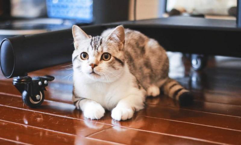 家裡有貓咪,搬家時要特別注意什麼?