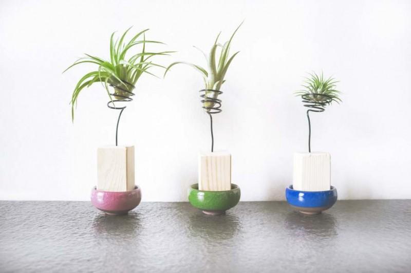 室內裝潢聖品「空氣鳳梨」最適合忙碌都市人養的室內植物!